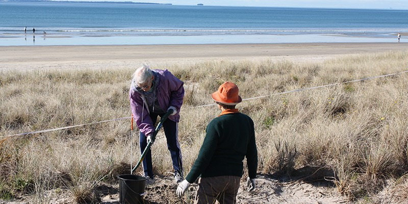Plantings by Coast Care volunteers
