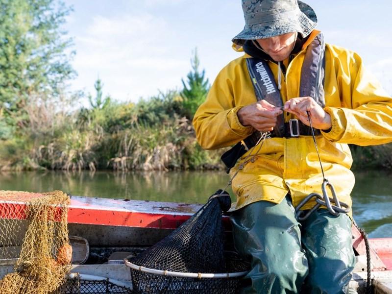 Geoff managing catfish in Lake Rotoiti.