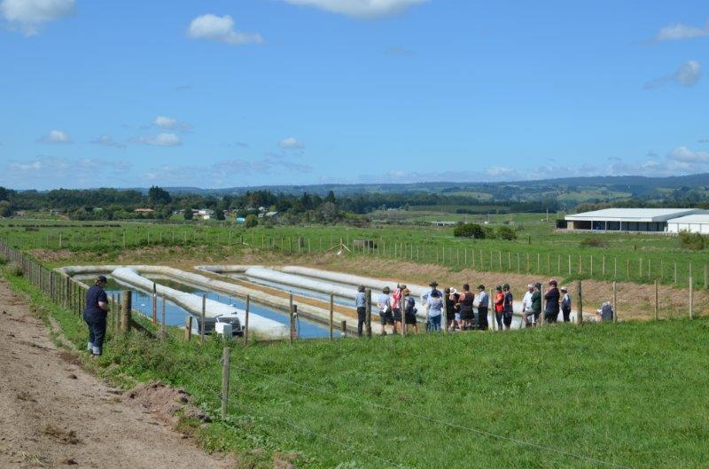 dairy effluent trial 7