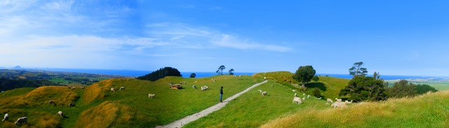 low res Papamoa Hills - Courtney and sheep